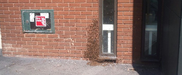 bees_attack_plusnet_uk