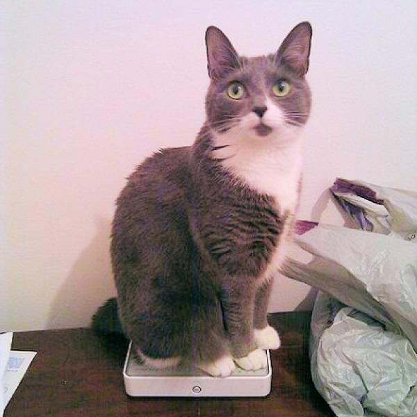 cat sitting on be broadband router uk
