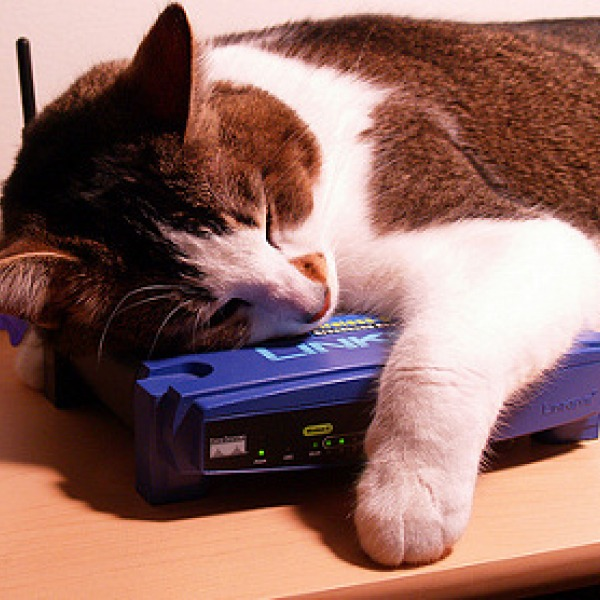 cat sleeping on a broadband router