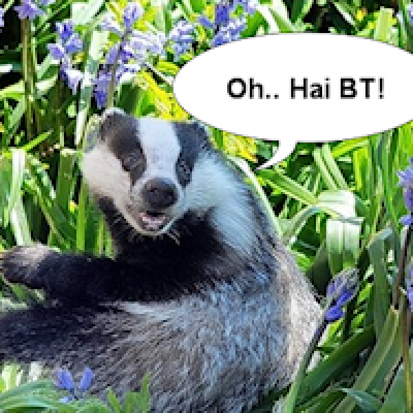 badger_bt