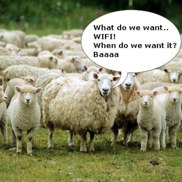 sheep_wifi