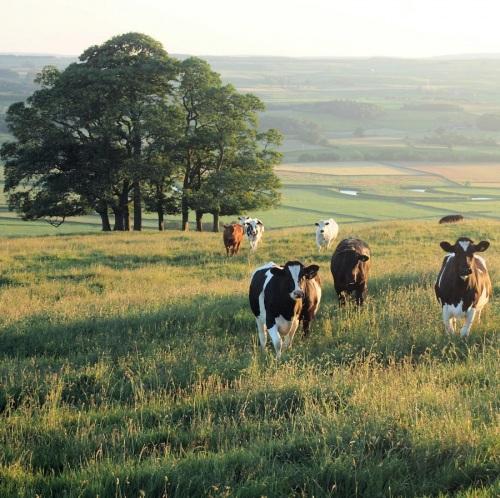 farming rural broadband mobile and cows