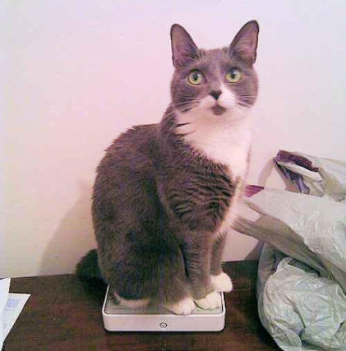 cat sitting on be broadband router uk