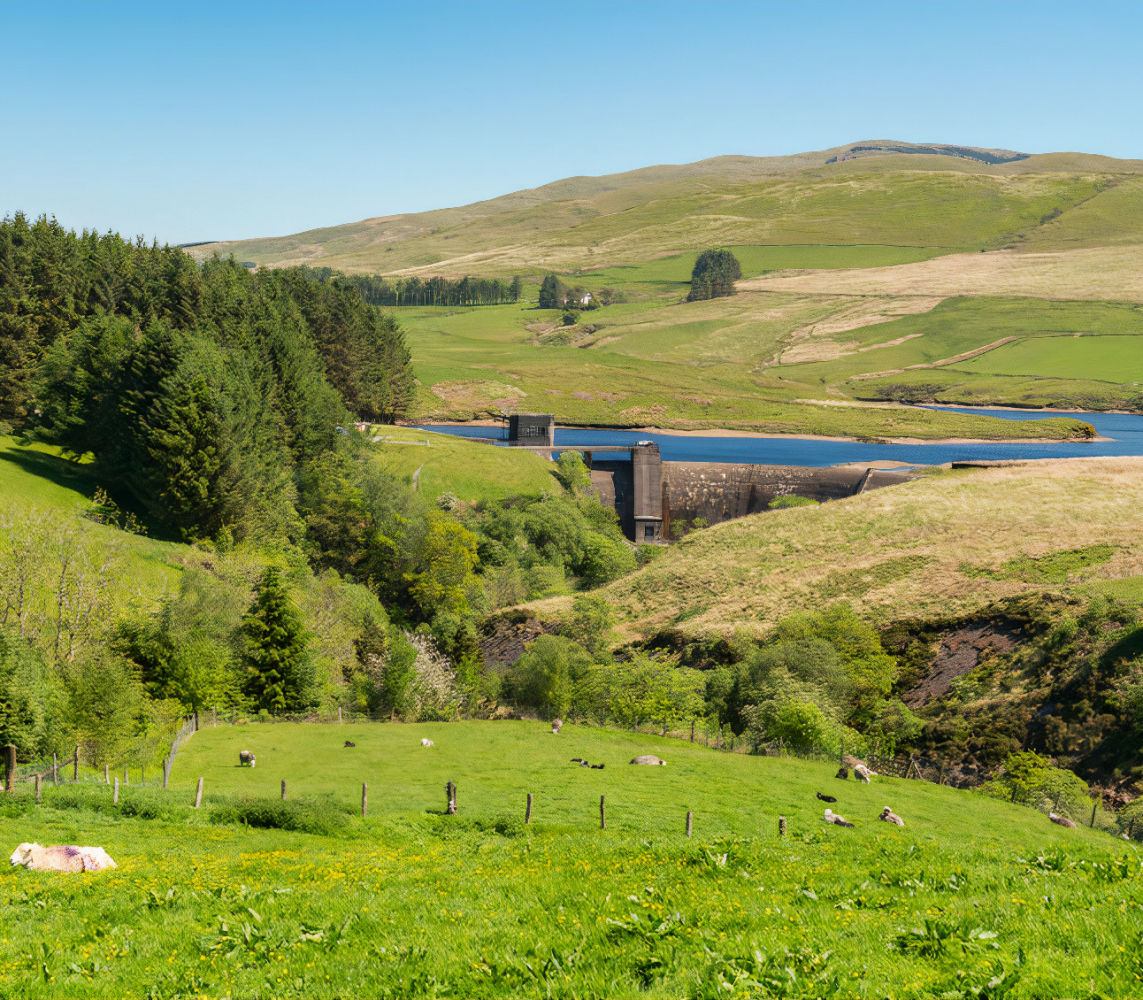 Sheep on a meadow and the Dinas Reservoir, near Ponterwyd Ceredigion, Dyfed, Wales, UK